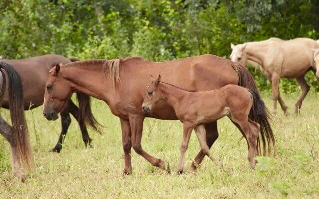 A cavallo con i gauchos nel nord dell'Argentina